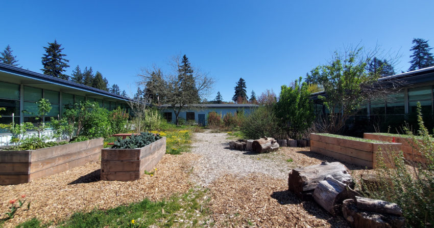 Wide shot of Gilbert Park Garden. Raised flower beds in foreground with a bright, clear, blue sky
